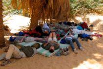 The sleeping lambs