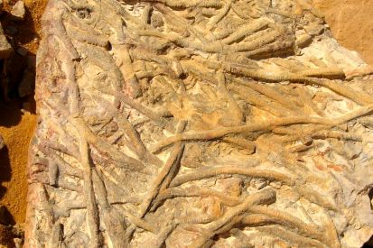 Worm fossils near Chirfa
