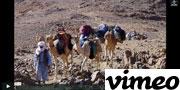 vimbo