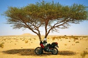sf-ham-tree
